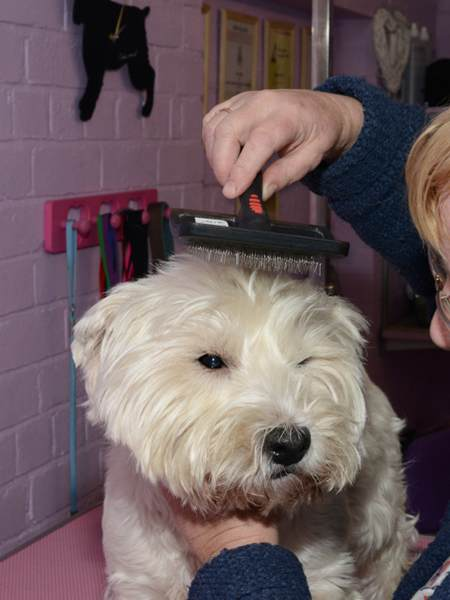 Dog Grooming Image. All rights reserved.